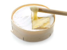 Round soft cheese Stock Photography