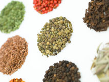 Round spices Stock Image