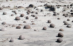 Round stones balls in Ischigualasto, Valle de la Luna Royalty Free Stock Images