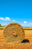 Round straw bale in a crop field in Spain after harvesting Stock Photo