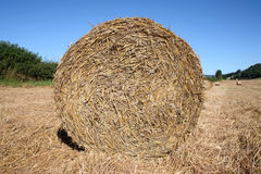 Round straw bale in a field. Royalty Free Stock Images