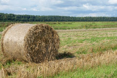 Round straw bale in the meadow Royalty Free Stock Photo