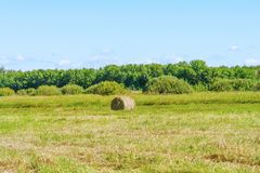 Round straw bale in a meadow. Countryside landscape Stock Photos