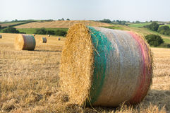 Round Straw Bale With Netting. Royalty Free Stock Image