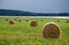 Round straw bales. Straw bales as put in the field Royalty Free Stock Image