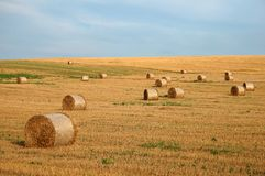 Round straw bales 2. Group of round straw bales on the field Royalty Free Stock Photography