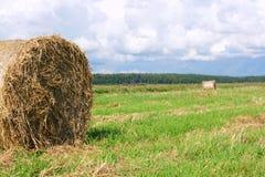 Round straw bales Stock Image