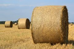 Round straw bales Stock Photos