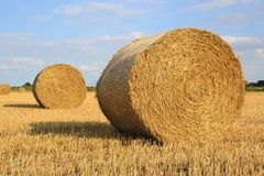 Round straw bales Stock Images