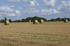 Round straw bales in a field in the countryside Stock Images