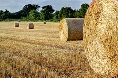 Round straw bales in a field. Hdr. Stock Images