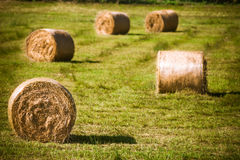 Round straw bales in harvested field Royalty Free Stock Images