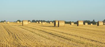 Round straw bales in harvested field Stock Images