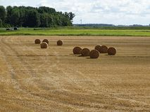 Round straw bales on the harvested field in the sun l stock photography