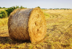 Round straw bales in harvested fields Stock Image