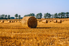 Round straw bales in harvested fields Royalty Free Stock Photo