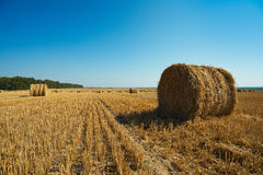 Round straw bales Royalty Free Stock Images