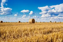 Round straw bales in harvested fields and blue sky with clouds Royalty Free Stock Photo