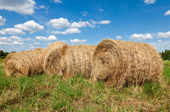 Round straw bales in harvested fields and blue sky Stock Photos