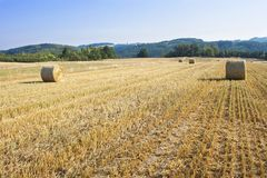 Round straw bales in harvested fields and blue sky without clouds. Beautiful countryside landscape. Royalty Free Stock Photography