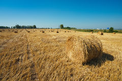 Round straw bales in harvested fields Stock Photography