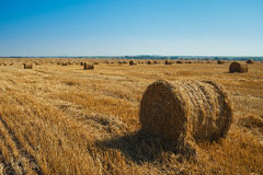 Round straw bales in harvested fields Royalty Free Stock Image