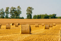 Round straw bales in harvested fields Stock Photos