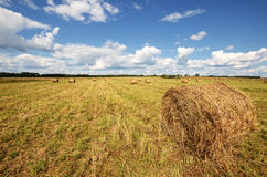Round straw bales Royalty Free Stock Photography