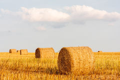 Round straw bales Stock Photography