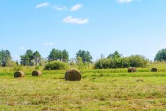 Round straw bales in a meadow Stock Images