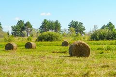 Round straw bales in a meadow Royalty Free Stock Photos