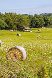 Round straw bales in summer field. Royalty Free Stock Images