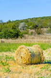 Round straw bales in summer Stock Images