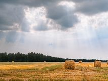 Summer in the European countryside stock images