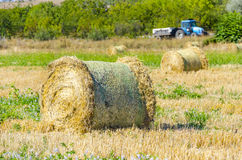 Round straw ballas on field Royalty Free Stock Photo