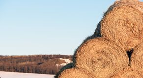 Free Round Straw Fodder Bedding Bales In Winter Stock Photo - 115471840