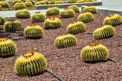 Round Succulent Plant Stock Images