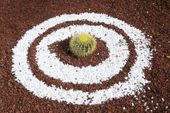 Round Succulent Plant Royalty Free Stock Image