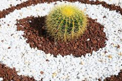Round Succulent Plant Royalty Free Stock Images