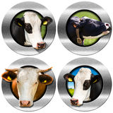 Round Symbols with Heads of Cows Stock Image