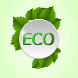 Round tag with the leaf and the word ECO on it. On a light green background. Royalty Free Stock Images