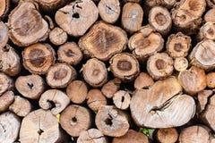 Round teak wood stump background royalty free stock image