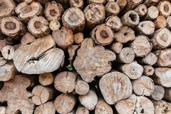 Round teak wood stump background royalty free stock photos