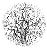 Round tree. Handmade illustration of round tree Royalty Free Stock Photos