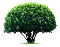 Round tree Stock Images