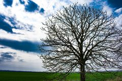 round tree against the background of the field and beautiful clouds stock photos