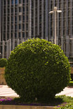 Round tree in front of building facade Royalty Free Stock Images