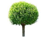 Round tree Stock Photography