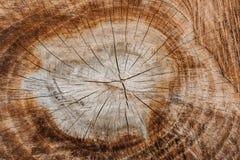 Round tree structureTree ring backgroundRound basic texturesw. Round tree structure Tree ring background Round basic textures wooden floor.nbrown yellow Stock Photo
