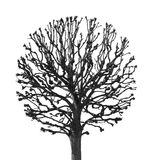 Round tree. On a white background Royalty Free Stock Images